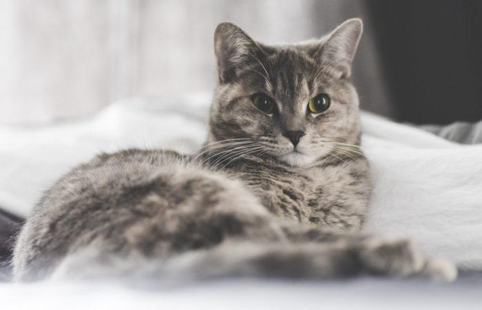 Deciphering Your Cat's Language