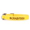 Collare Zuky #CrazyDog