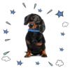 Collare ZUKY Attenti al cane