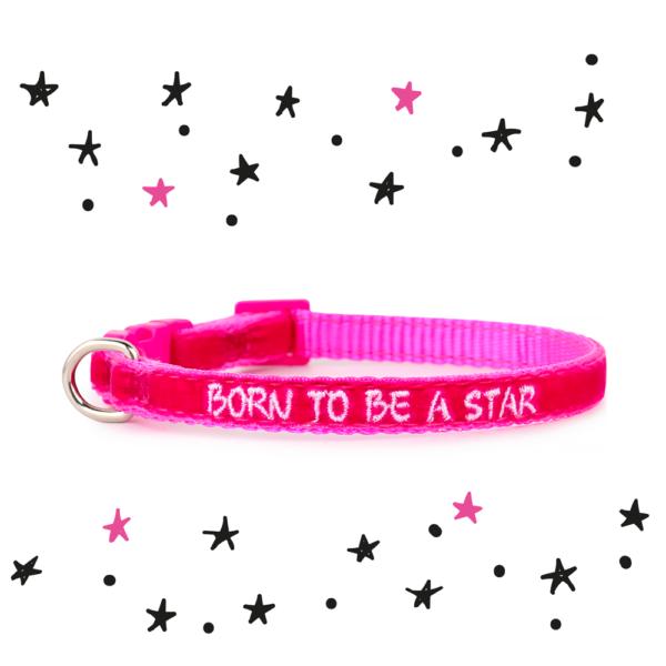 Collare ZUKY MINI Born to be a star